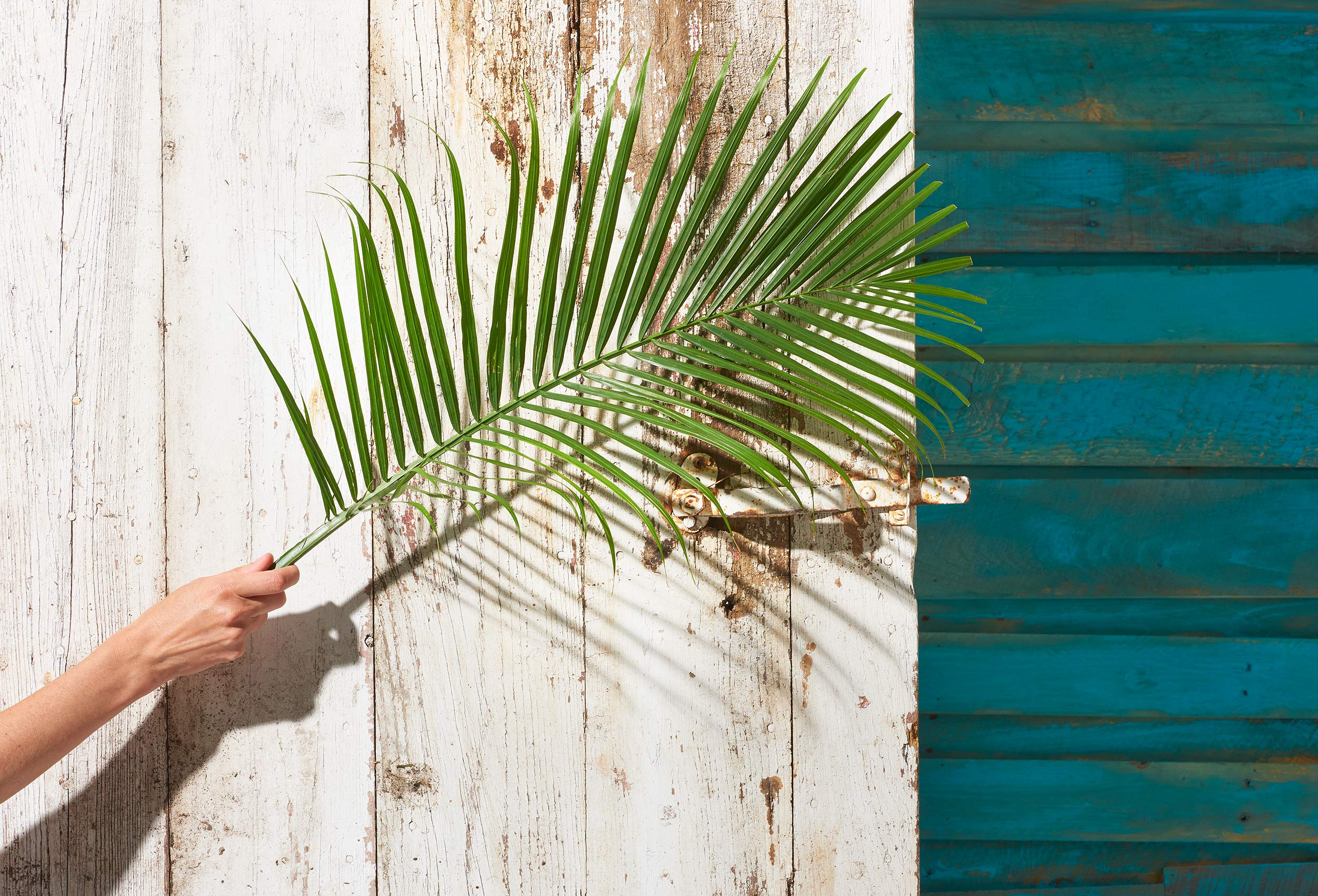 Female hand holding palm leaf in front of aged white barn door and aged blue wall